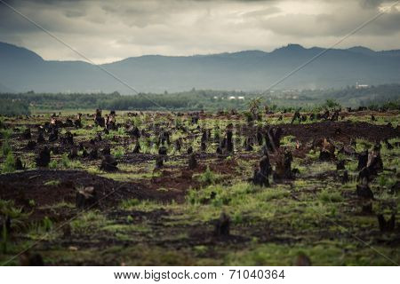 Stumps on the valley caused by deforestation and slash and burn type of agriculture of Madagascar