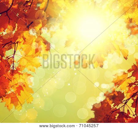 Autumn. Blurred Fall Abstract autumnal background with colorful leaves and sun.