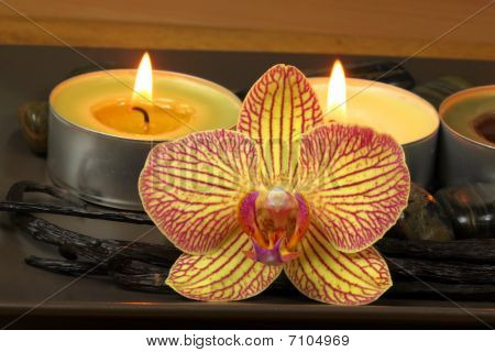 Orchid And Vanilla In Spa
