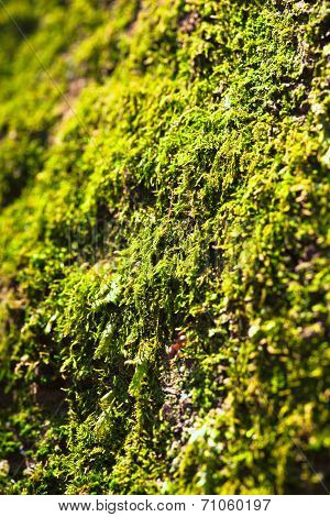 Views of the moss