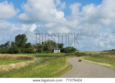 Cat On Road On Texel.