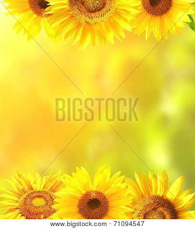 Border with bright yellow sunflowers