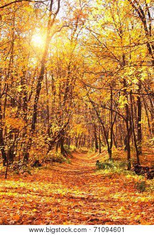 Beautiful landscape - autumn forest