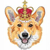 picture of crown jewels  - color sketch of the dog Pembroke Welsh corgi breed in gold crown - JPG