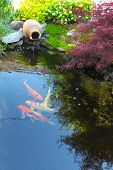 picture of fish pond  - Koi fish in a small decorative pond - JPG