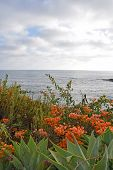 stock photo of southern  - A view of Laguna Beach on a summer afternoon - JPG