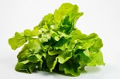 stock photo of butter-lettuce  - Fresh lettuce isolated on the white background - JPG