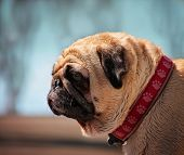 stock photo of begging dog  - a cute dog at a local public pool - JPG