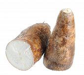 picture of cassava  - many cassava  - JPG