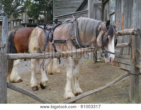 Horses of a carriage and pair