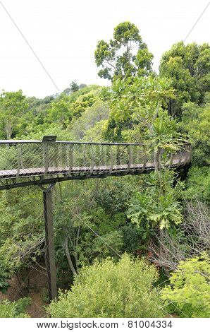 Kirstenbosch Tree Canopy Walkway, The Boomslang