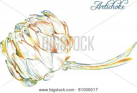 Hand drawing artichoke