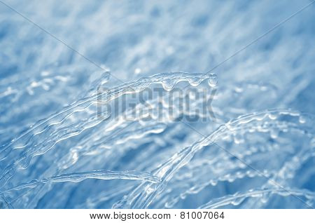 Icy Grass