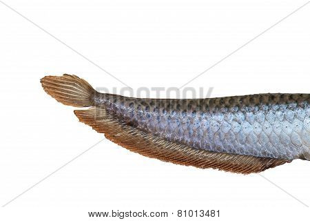 Tail Of Arowana Fish