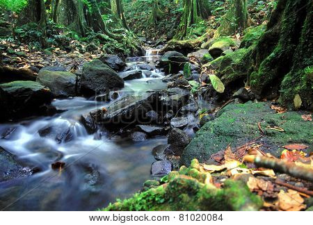 Moorea Rainforest Cascade