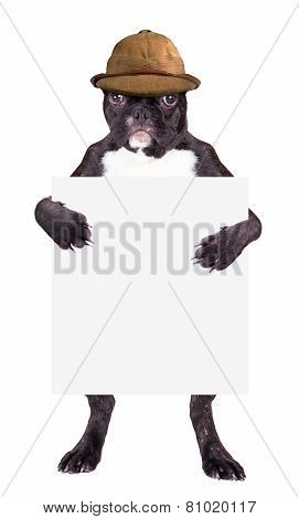 French Bulldog In Beige Hat