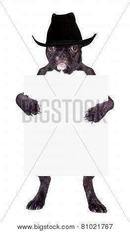 French Bulldog In A Cowboy Hat