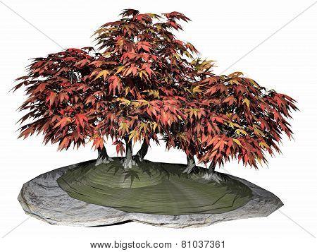Japanese maple tree bonsai - 3D render