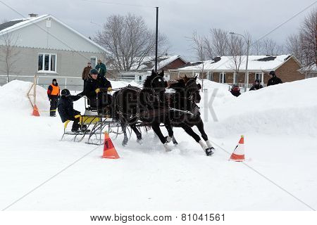 Team Of Horses Obstacle Cone Driving