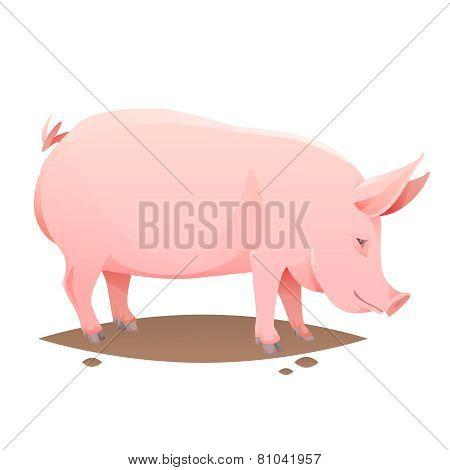 Pink farm pig
