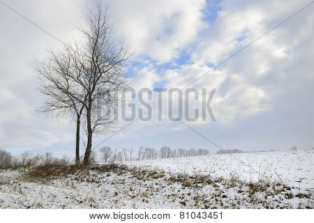 Winter Landscape of Bare Tree in Field
