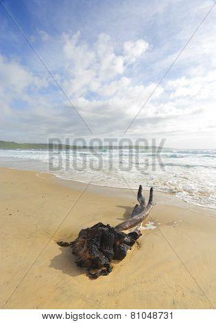 Intertwined At Mystics Beach