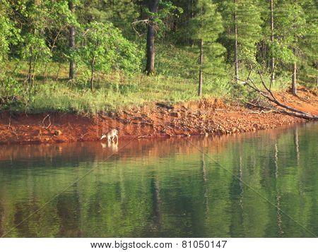 deer on lake