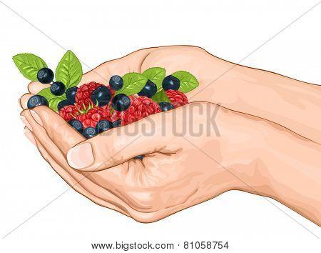 Hands holding ripe raspberries and blueberries. Vector illustration.