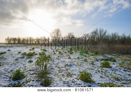 Photographer in a snowy field