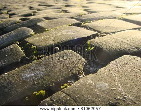 Old Cobble Stone Road With Moss And Evening Low Sun