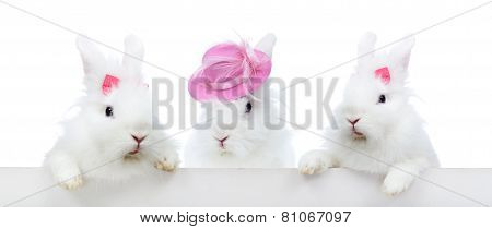 Three Cute White Rabbit - Isolated