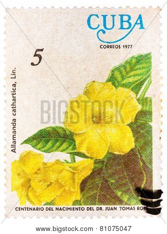 Stamp printed by Cuba shows Allamanda flowers Allamanda cathart