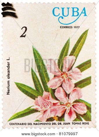 Stamp printed by Cuba shows the Oleander flower