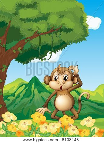 A monkey at the forest