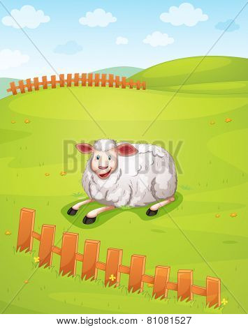 A sheep at the field