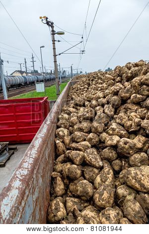 sugar beet and freight train symbol of harvest, logistics, renewable resource