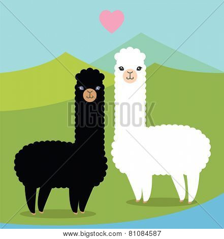 Two cute alpacas in love
