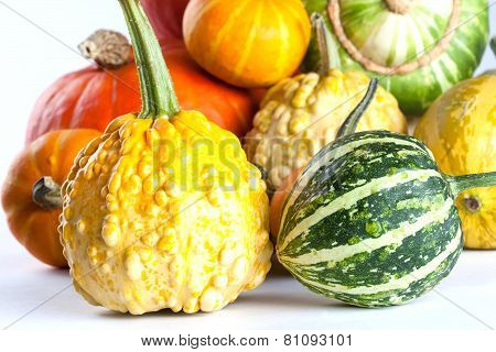 Colorful Pumpkins. Varieties