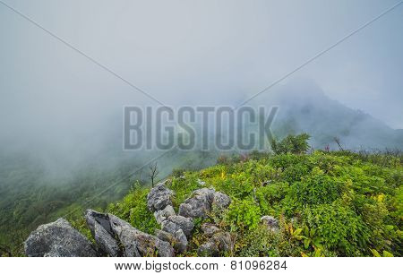 Morning mist and cloud with plant in spring