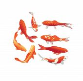 stock photo of koi  - Red and gold koi fishes vector design elements - JPG