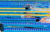 picture of swim meet  - start swimming race in swimming pool performing freestyle - JPG