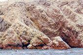 picture of ica  - Islas Ballestas - JPG