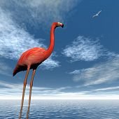 stock photo of pink flamingos  - One pink flamingo standing in the water looking at seagull flying upon the ocean  - JPG
