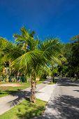 pic of playa del carmen  - Caribbean street Playacar Playa del Carmen Mexico - JPG