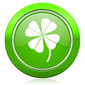 stock photo of four leaf clover  - four - JPG