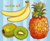 Постер, плакат: Vector Set With Banana Kiwi Pineapple