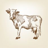picture of pastures  - cow hand drawn vector pasture village drawing - JPG
