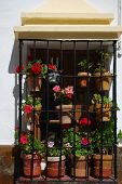 pic of ironworker  - Window with ironwork grills and flowers Ronda Andalusia Western Europe - JPG