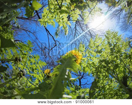 Spring Meadow - View From Below