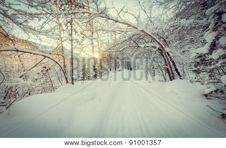 Winter trees arch